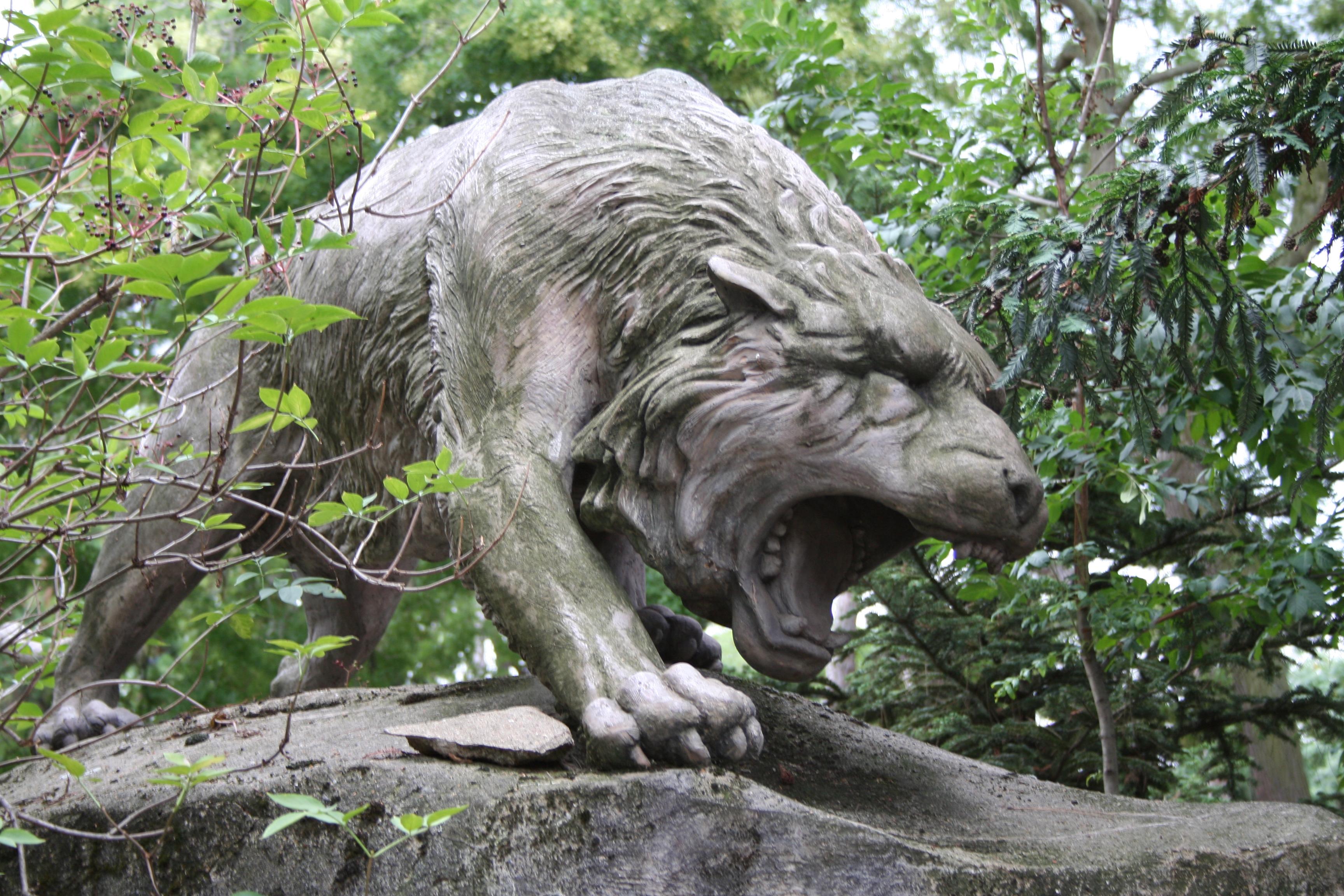 Loup menaçant à Vincennes