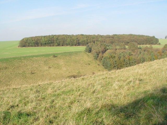 File:Pasture Dale Plantation - geograph.org.uk - 591098.jpg