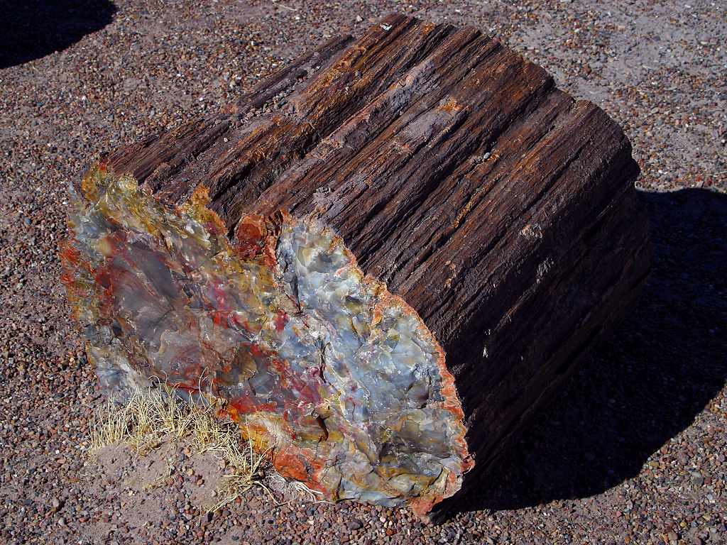 What does petrified wood look like
