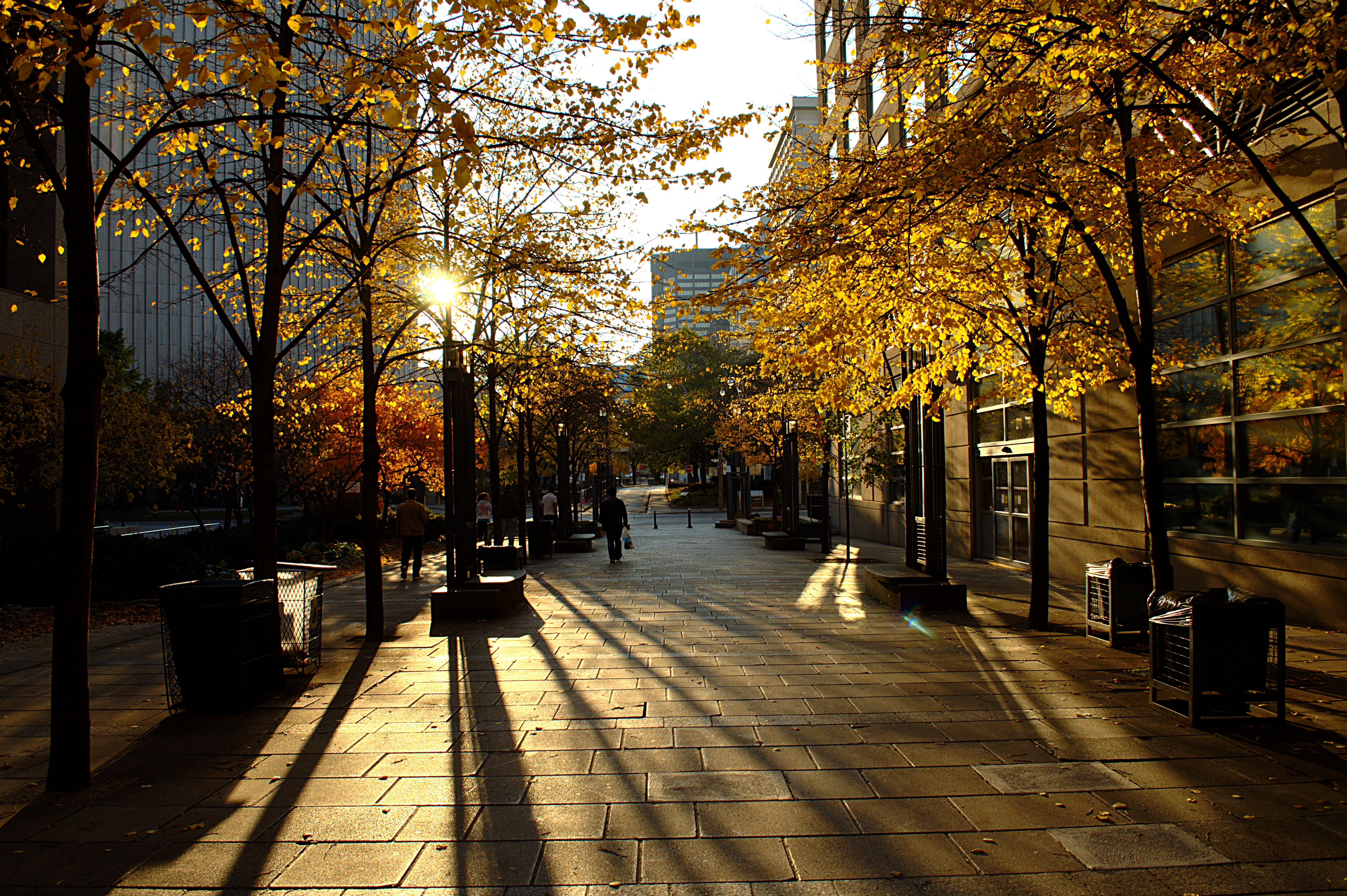 Image result for autumn light photos