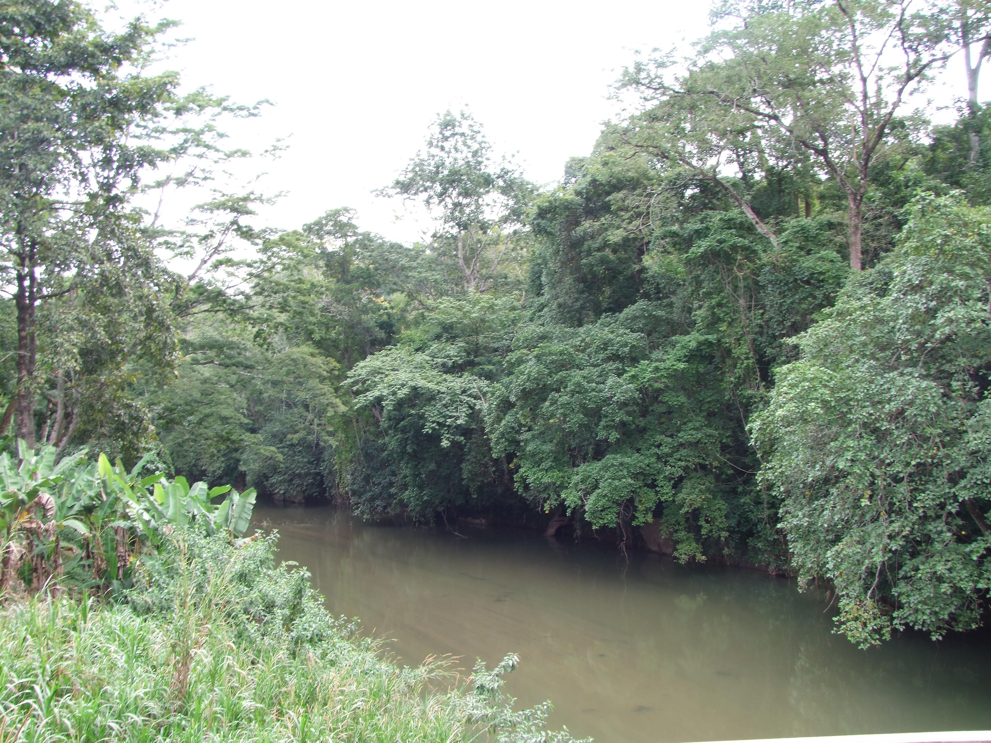 Kimboza Forest Reserve, Tanzania