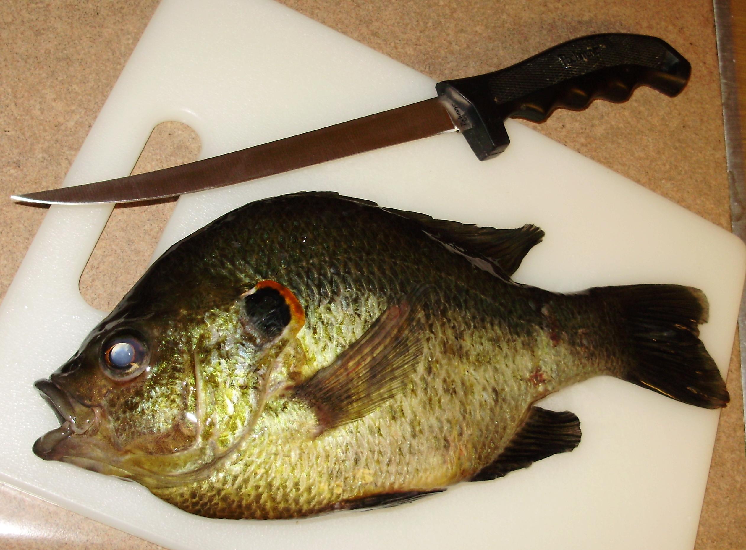 redear sunfish ForShell Cracker Fish