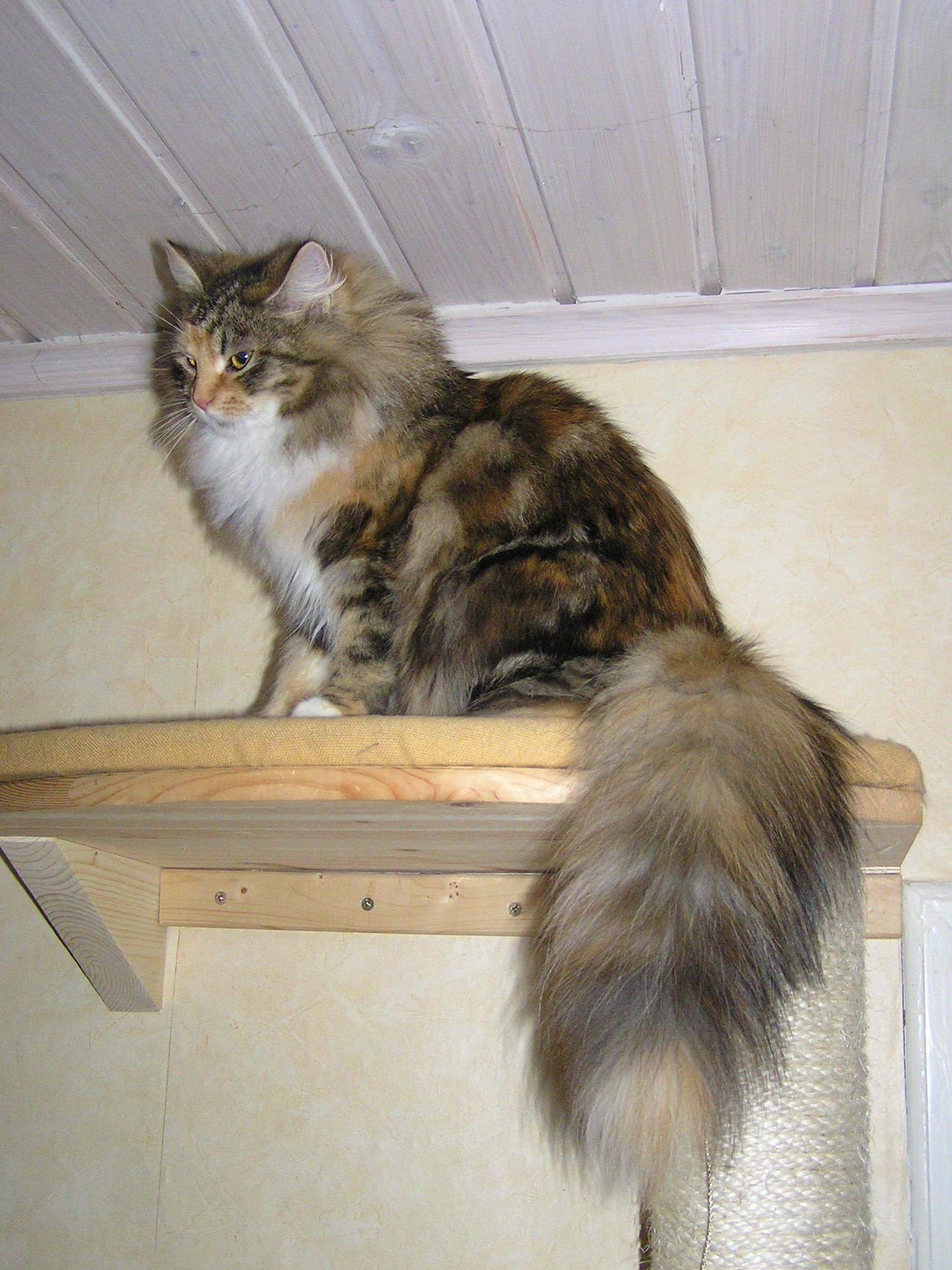 W Tails Cat  A Strange Presence