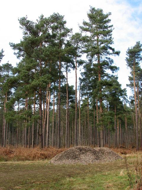 Pine Tree Village Property Management Fond Du Lac Wi