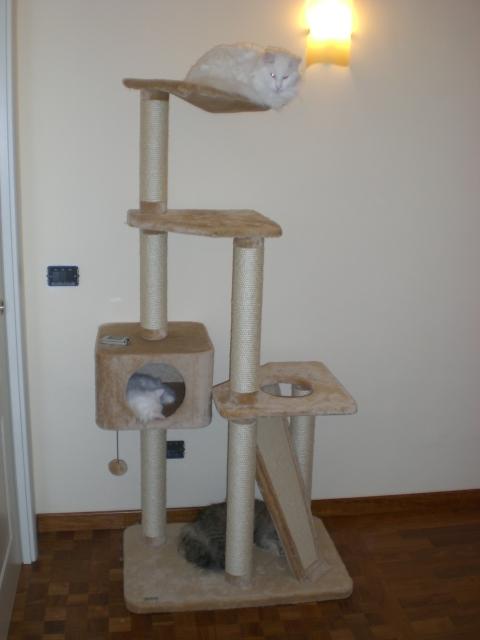 File tiragraffi con gatti jpg wikimedia commons for Tiragraffi gatti ikea