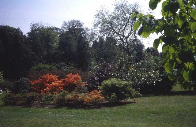 Trelissick Garden - geograph.org.uk - 473965