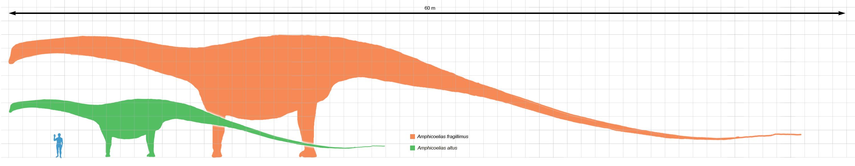 [Image: Amphicoelias_altus_scale.png]
