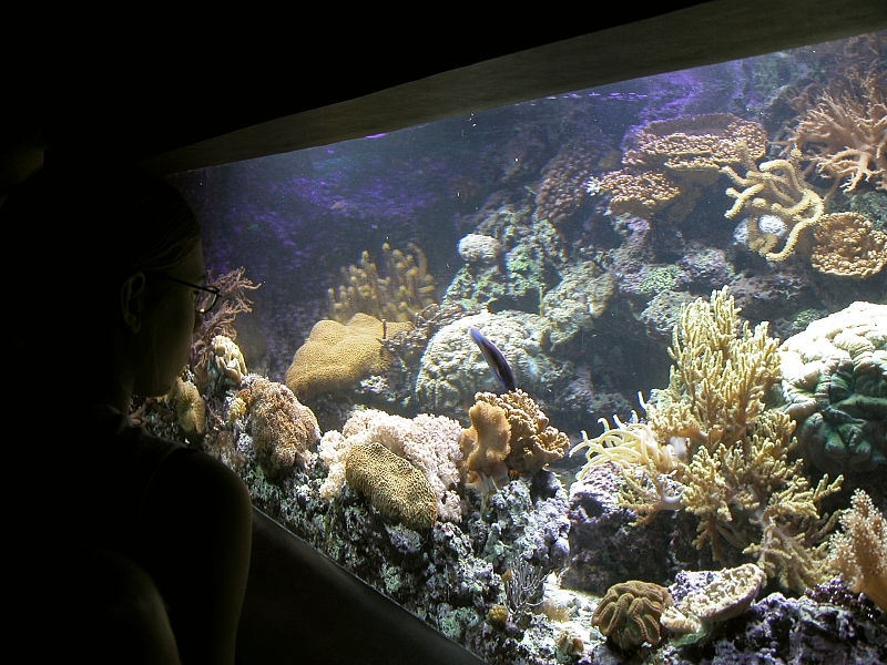 alt=Photo of water, coral, and fish behind a glass wall.