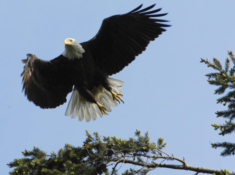 Eagle Lake Island Lodge Ontario Canada