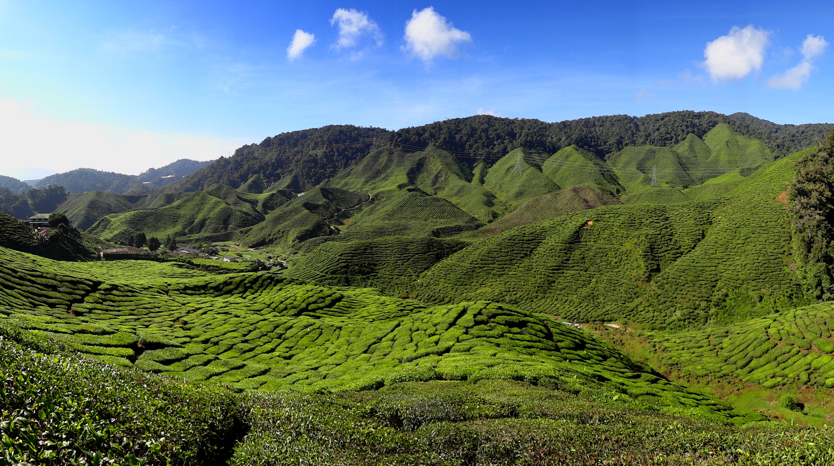 File cameron highlands tea plantation 2012 jpg wikimedia for Flore definition