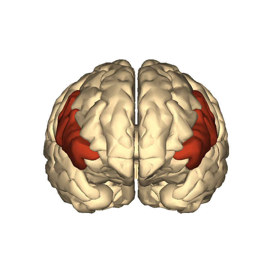 Filecerebrum Inferior Frontal Gyrus Anterior Viewg