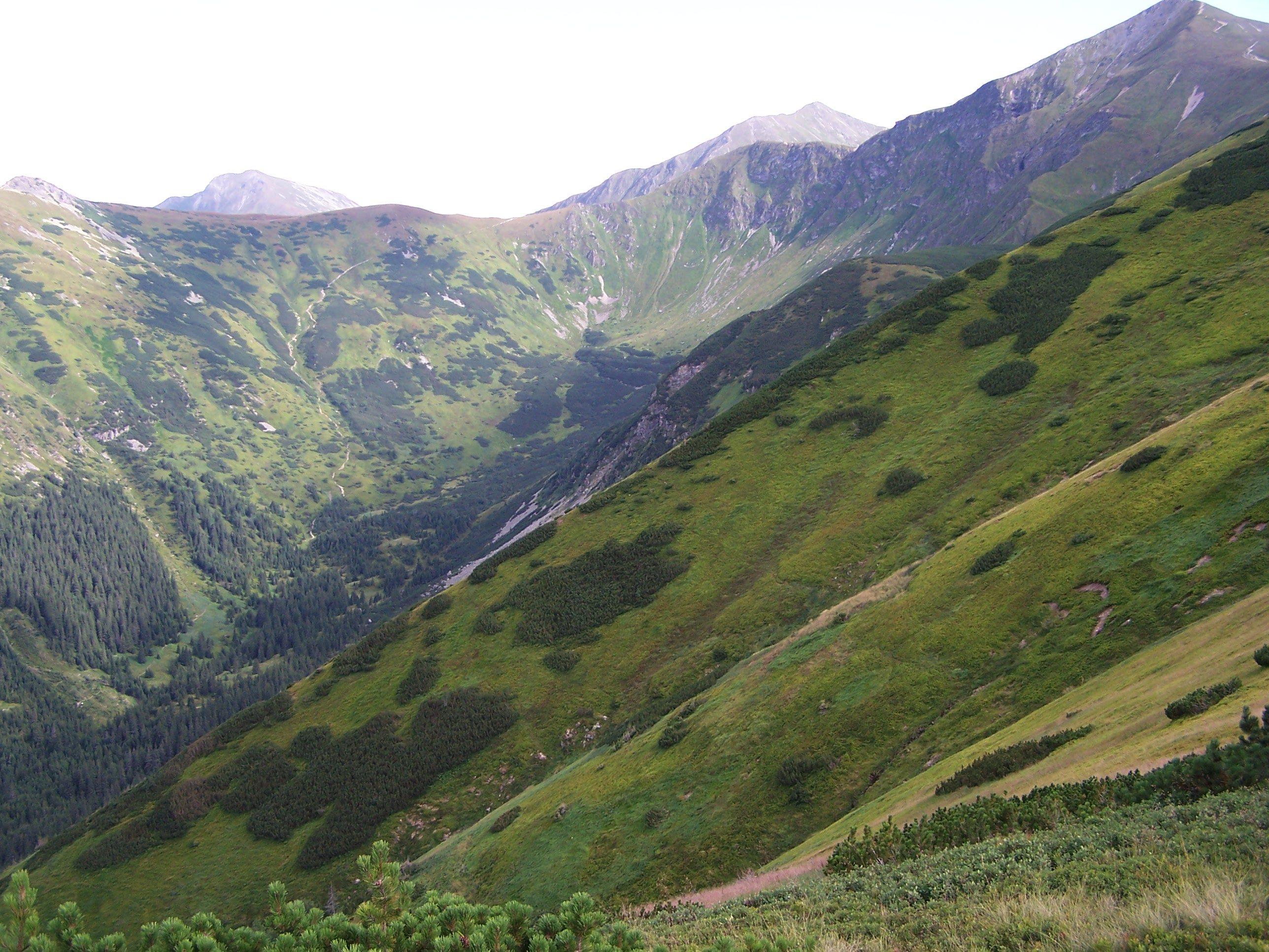 Górne partie Doliny Starorobociańskiej i szlak na Siwą Przełęcz, fot. Jerzy Opioła, źródło: Wikimedia, GNU