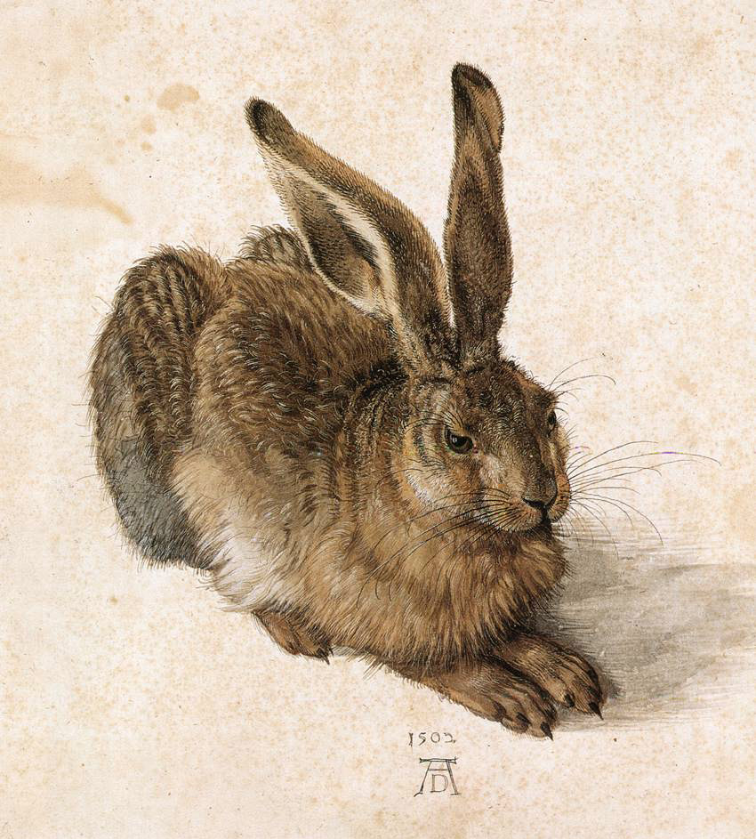 File durer young wikipedia for Hase malen