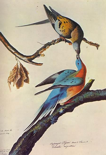 Las 5 aves extintas más impactantes del mundo