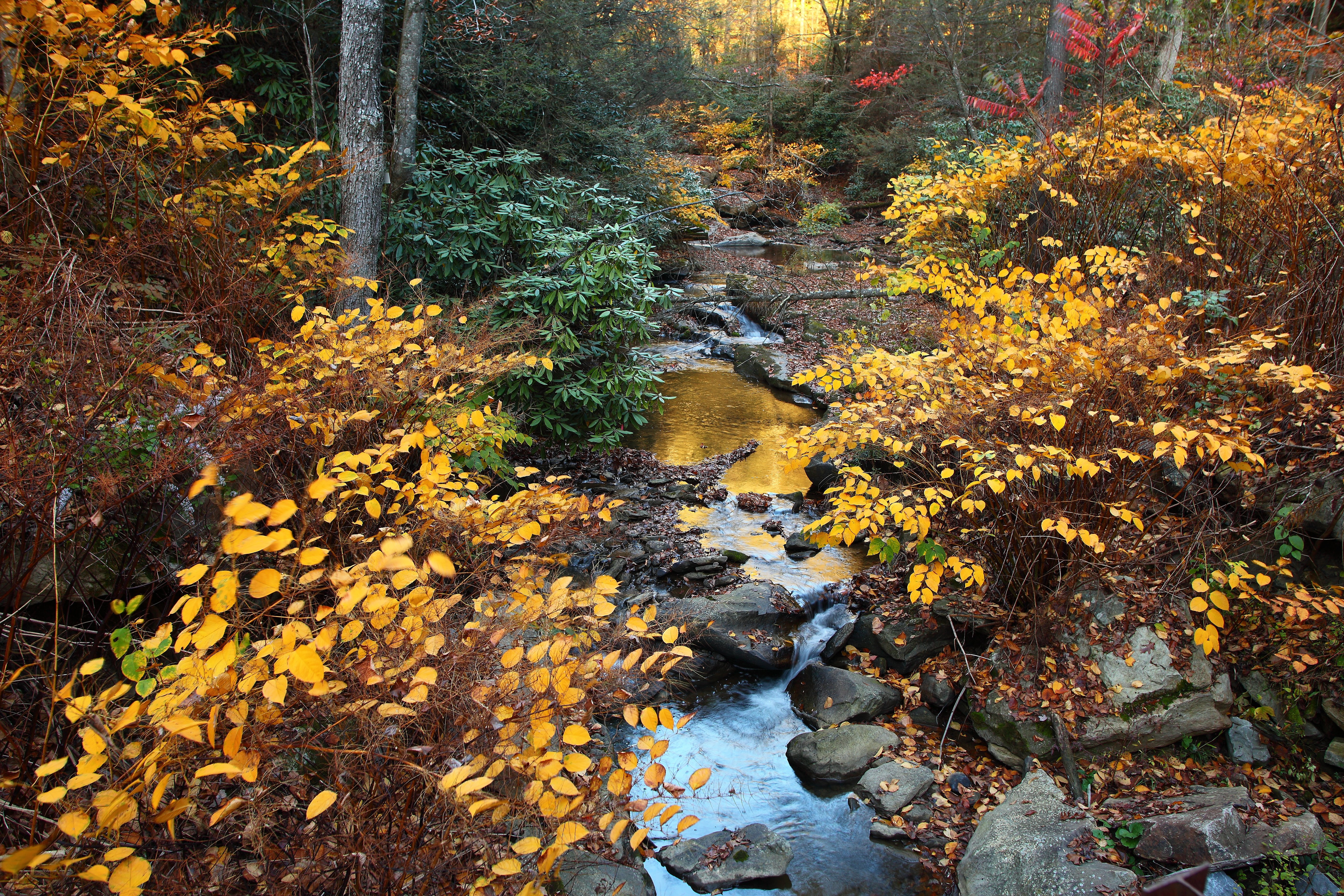 File Fall Foliage Forest Creek Scenery Sunset West