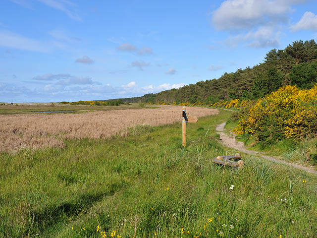 Footpath at Culbin Sands Nature Reserve - geograph.org.uk - 1344642