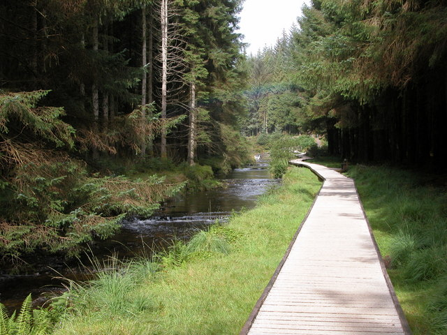 Forest Walk, Hafren Forest - geograph.org.uk - 228894