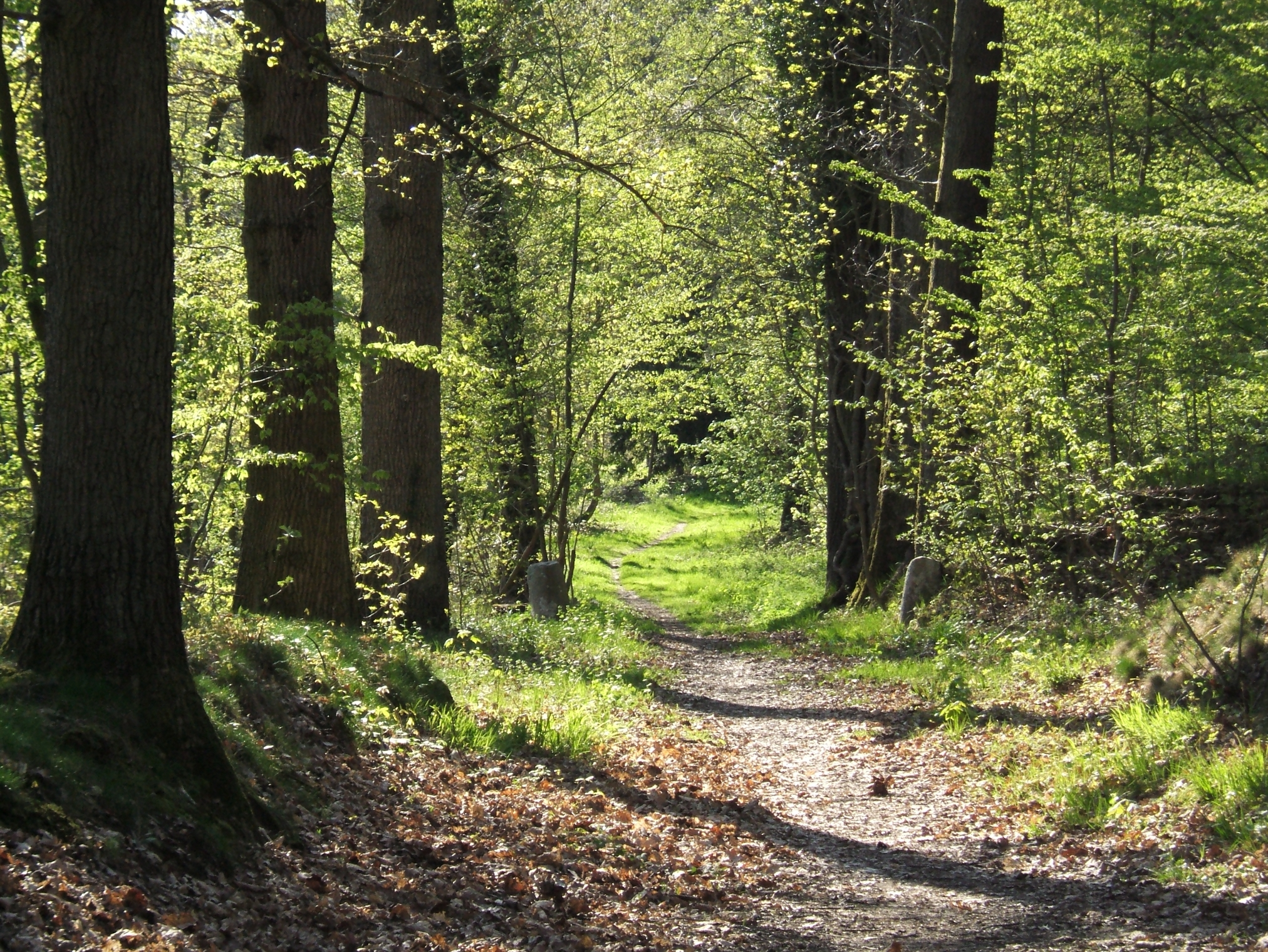 File forest path in yvelines wikimedia commons Pathway images