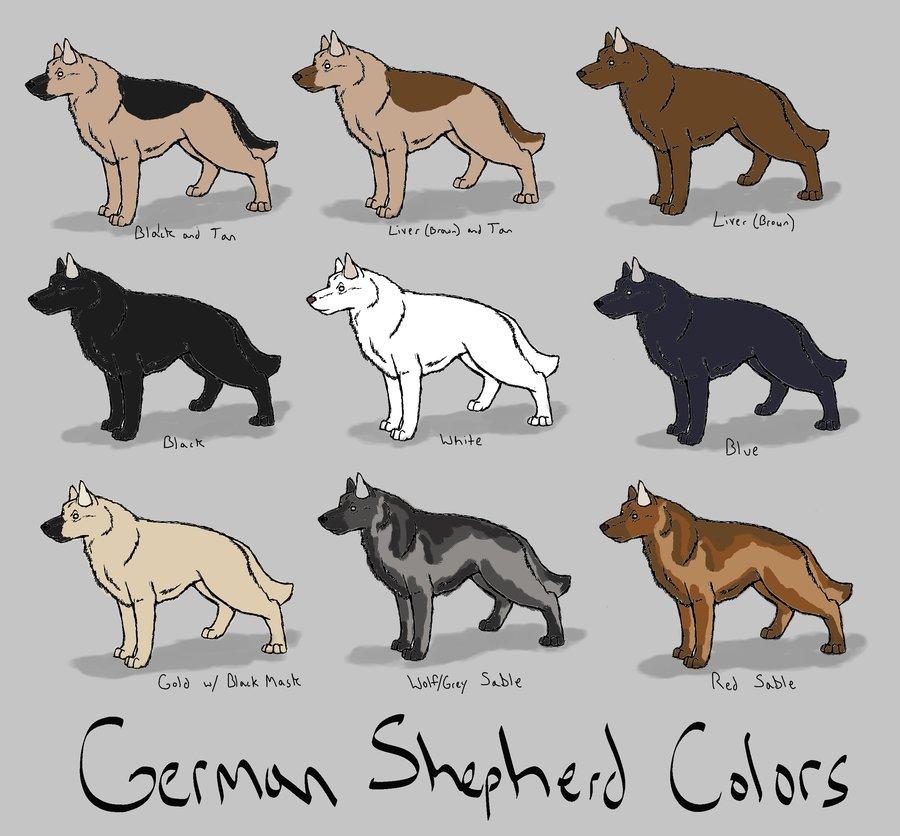 File German Shepherd Colors Ref By Azulamoonwolf D3kyj8p Jpg