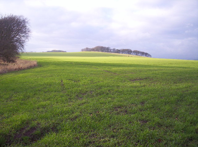 File:Grassy Field And Copse On Hill Top