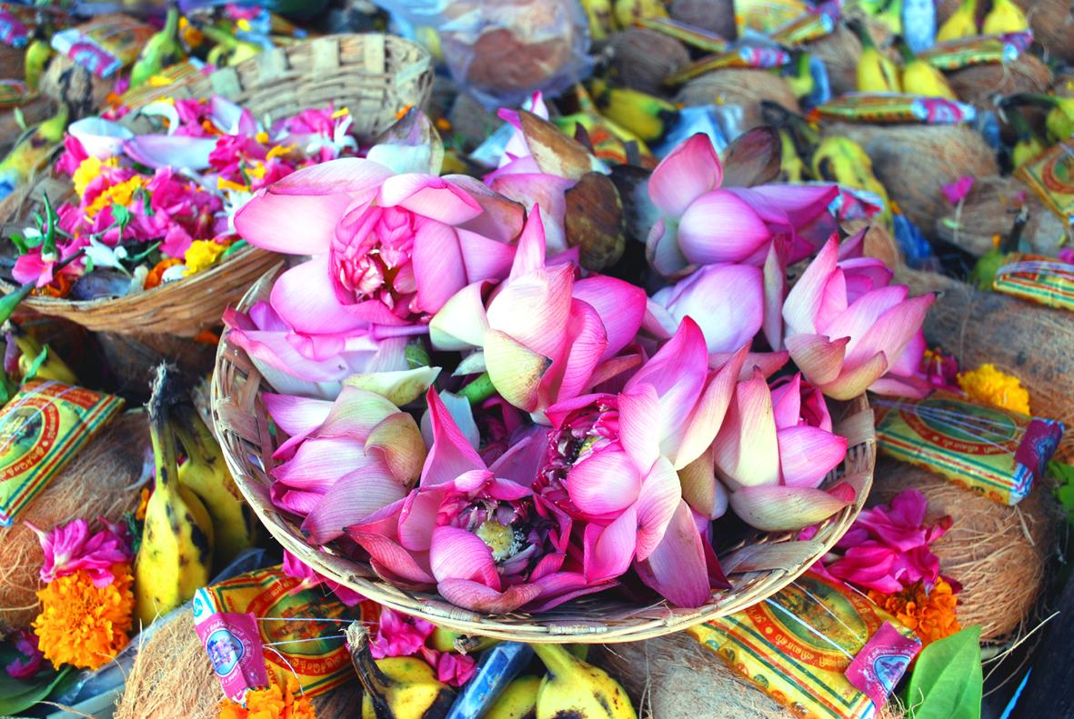 Fileindian Lotus Flowersg Wikimedia Commons