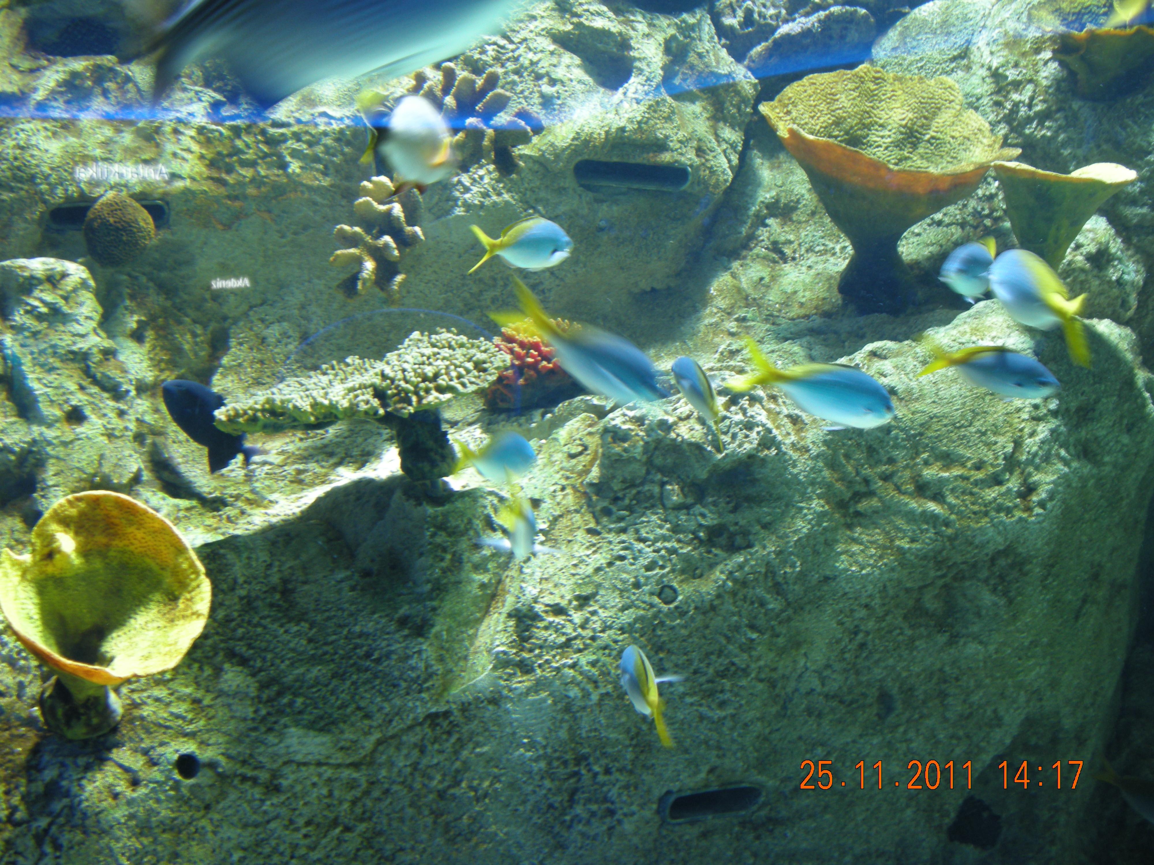 File:Istanbul Aquarium 57.jpg - Wikimedia Commons