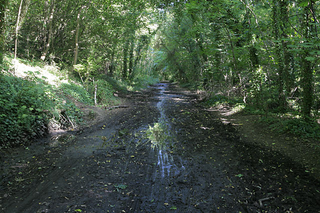 Meon Valley Trail, north of Wickham - geograph.org.uk - 235033