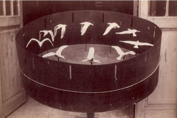 Marey's 1887 zoetrope with ten sculptures of different phases of the flight of a gull.