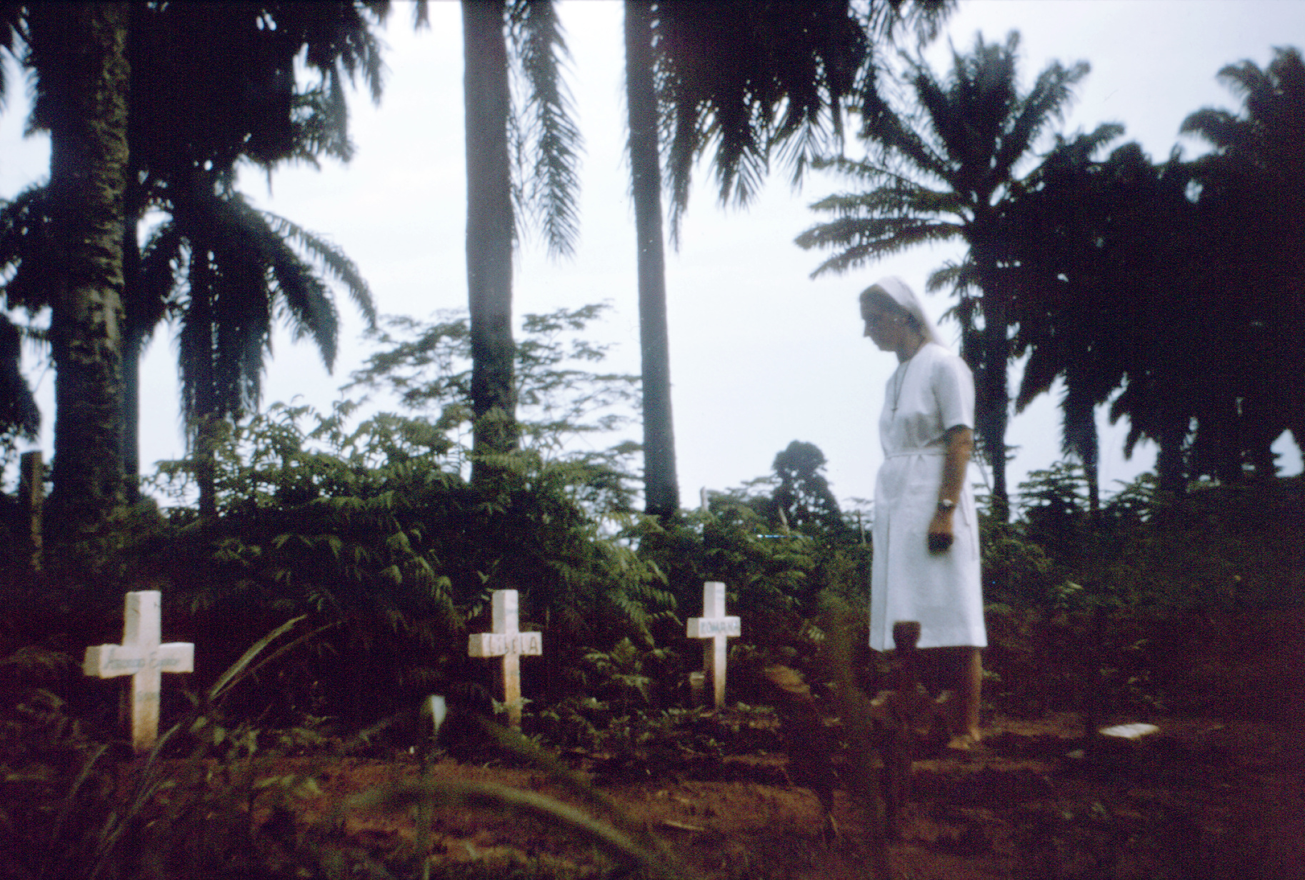 an analysis of the ebola virus in 1976 in zaire 1977 — ebola virus noted retrospectively in the village of tandala 1979 — (sudan virus) occurred in nzara, maridi recurrent outbreak at the same site as.