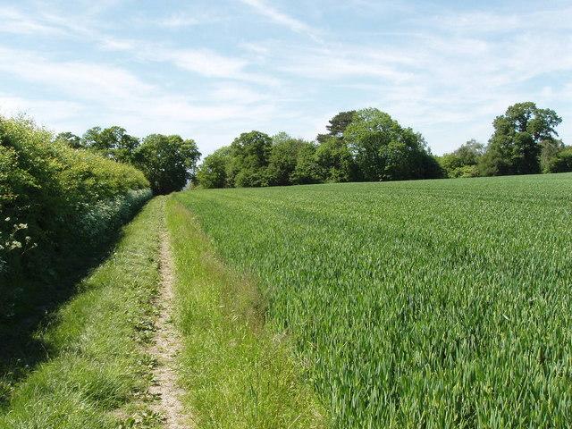 Oxfordshire-Buckinghamshire boundary near Boarstall - geograph.org.uk - 182548