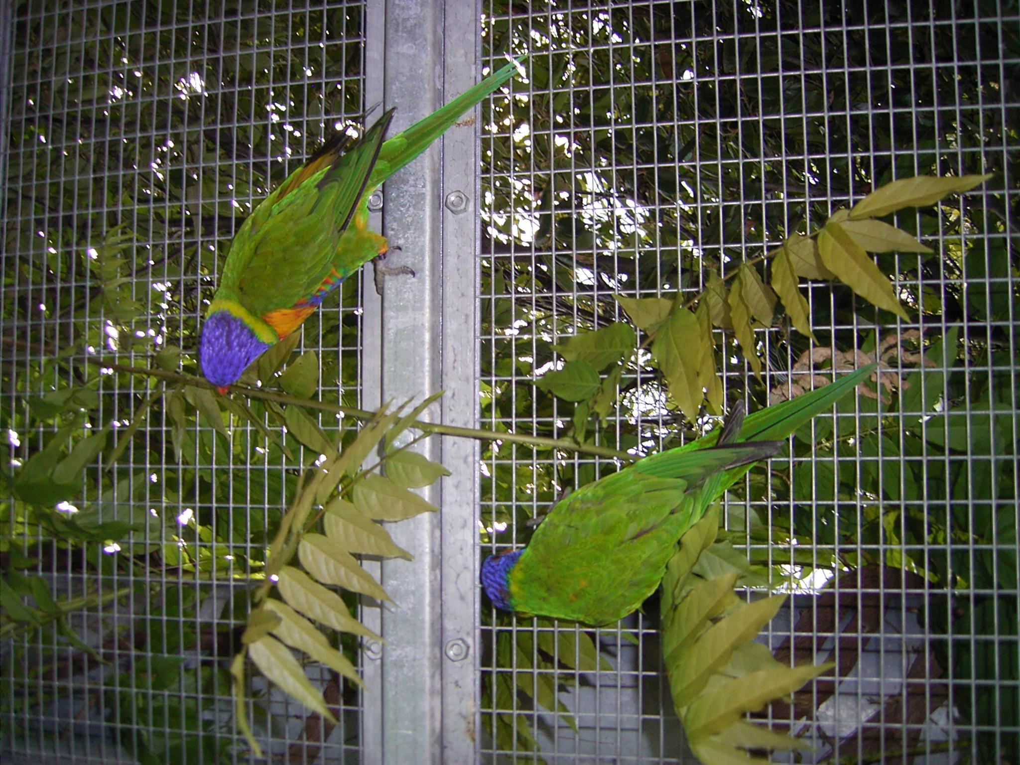 Papageien im ''Käfig''