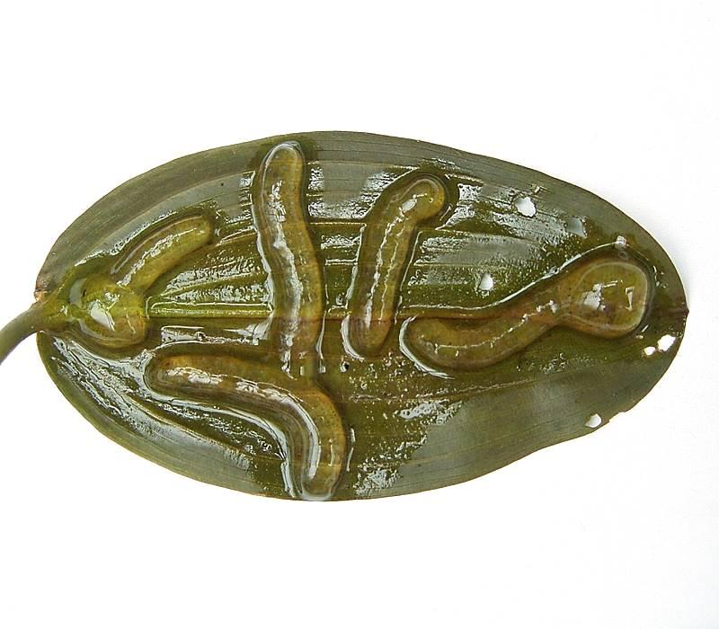 durchsichtige würmer im pool