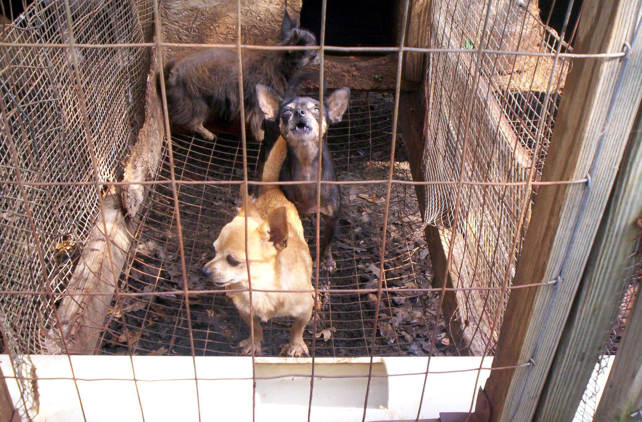 Dog Cages For Utes For Sale Victoria