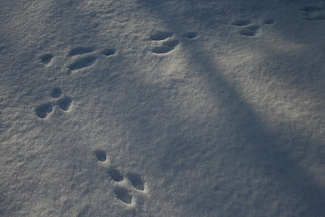 Rabbit Tracks - geograph.org.uk - 1659326