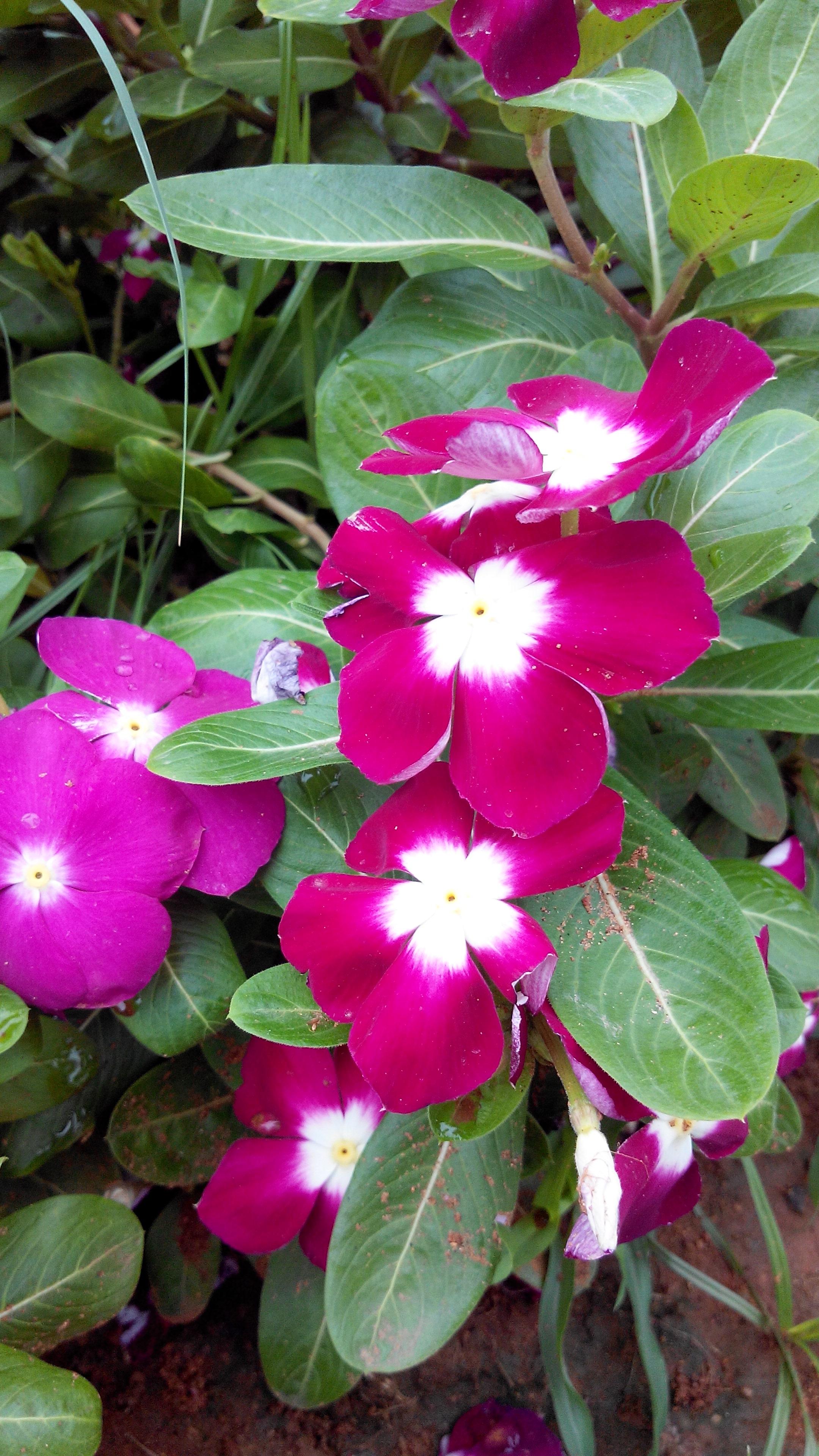 Filerare Flowers 05g Wikimedia Commons