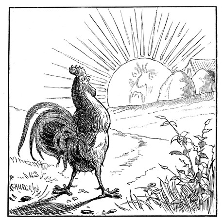 Rooster Crowing at the Sun.jpg