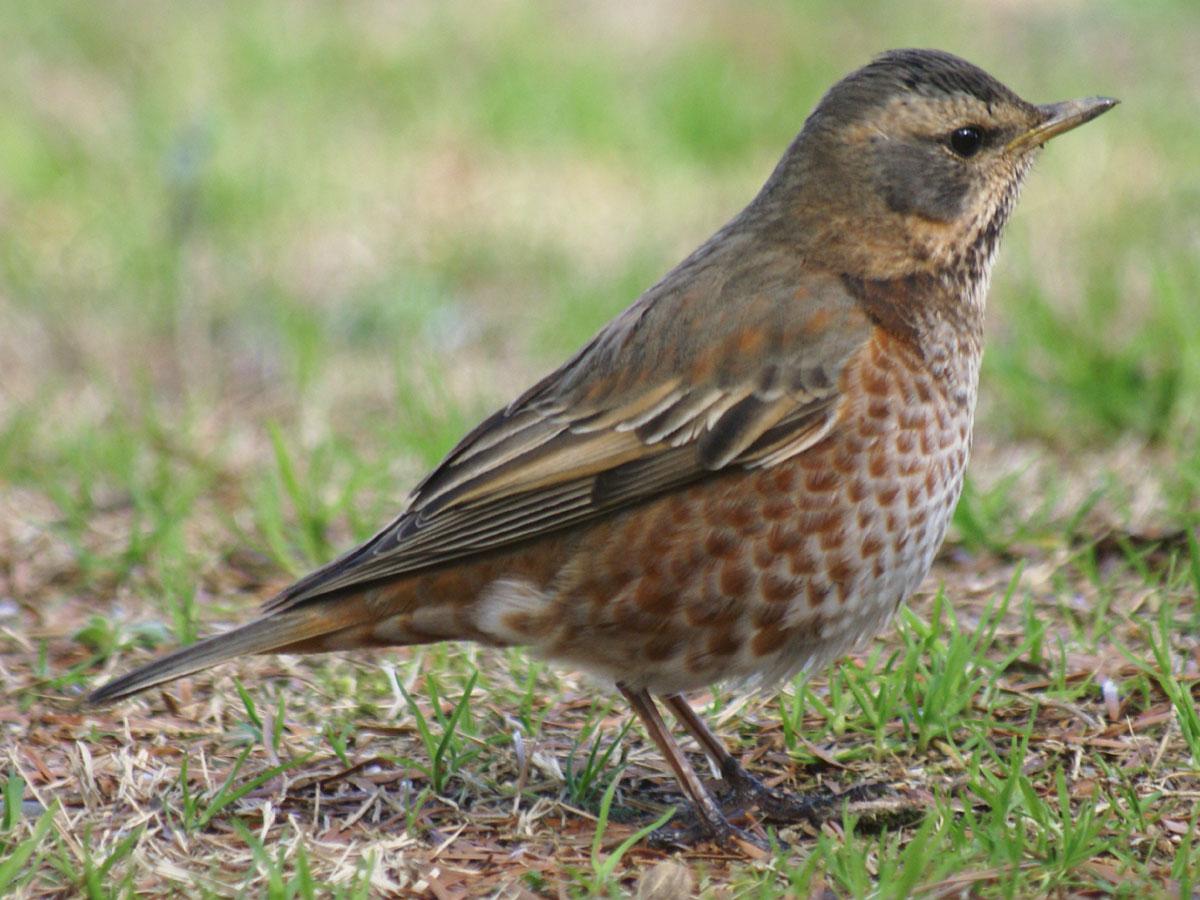 関東地方の探鳥地   野鳥情報.com