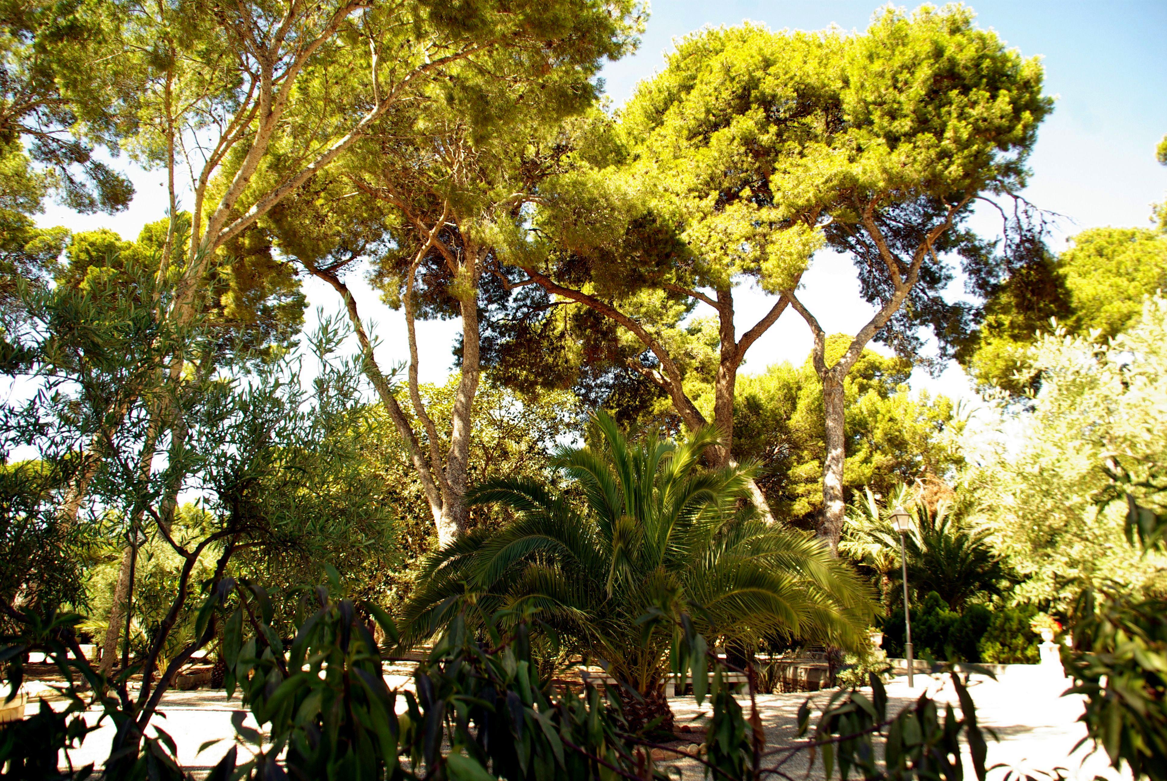 File:® ┼ M.D. EL CAMPELLO VILLA MARCO JARDÍN - panoramio (10).jpg ...