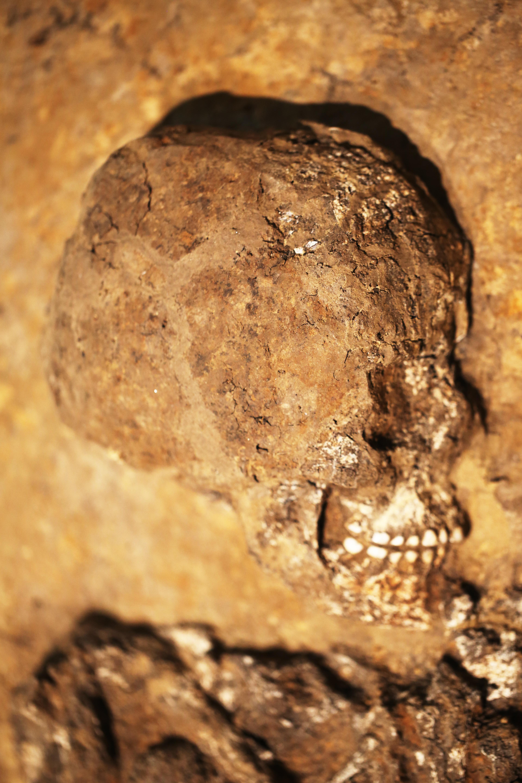 """File:""""Lilith"""", besonders gut erhaltene Gebiss des Skeletts aus der ..."""