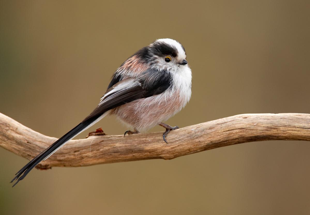 Vogel des Monats