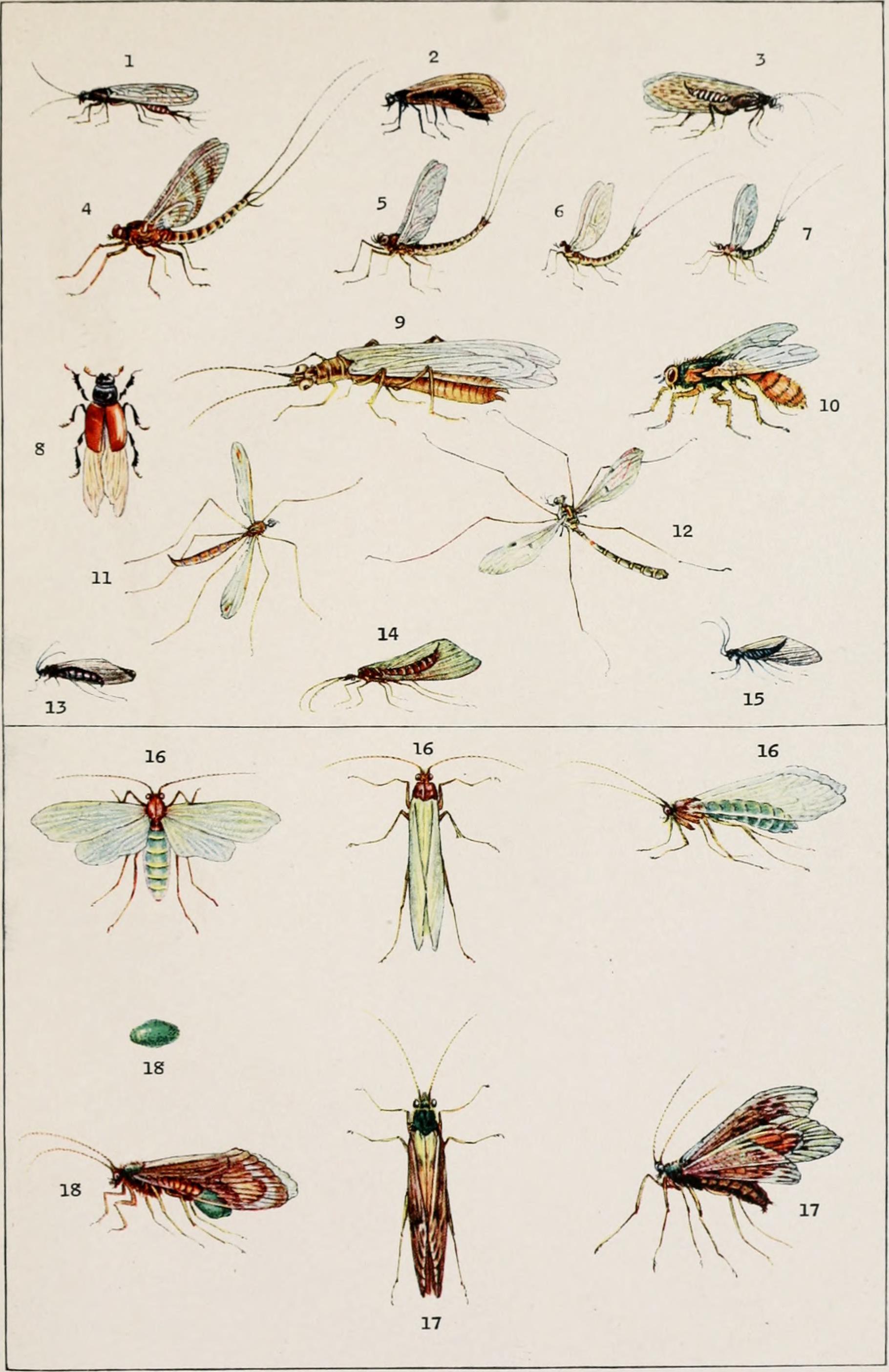 Aquatic Entomology Pennsylvania