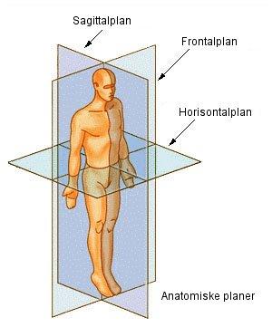 hvad betyder anatomi