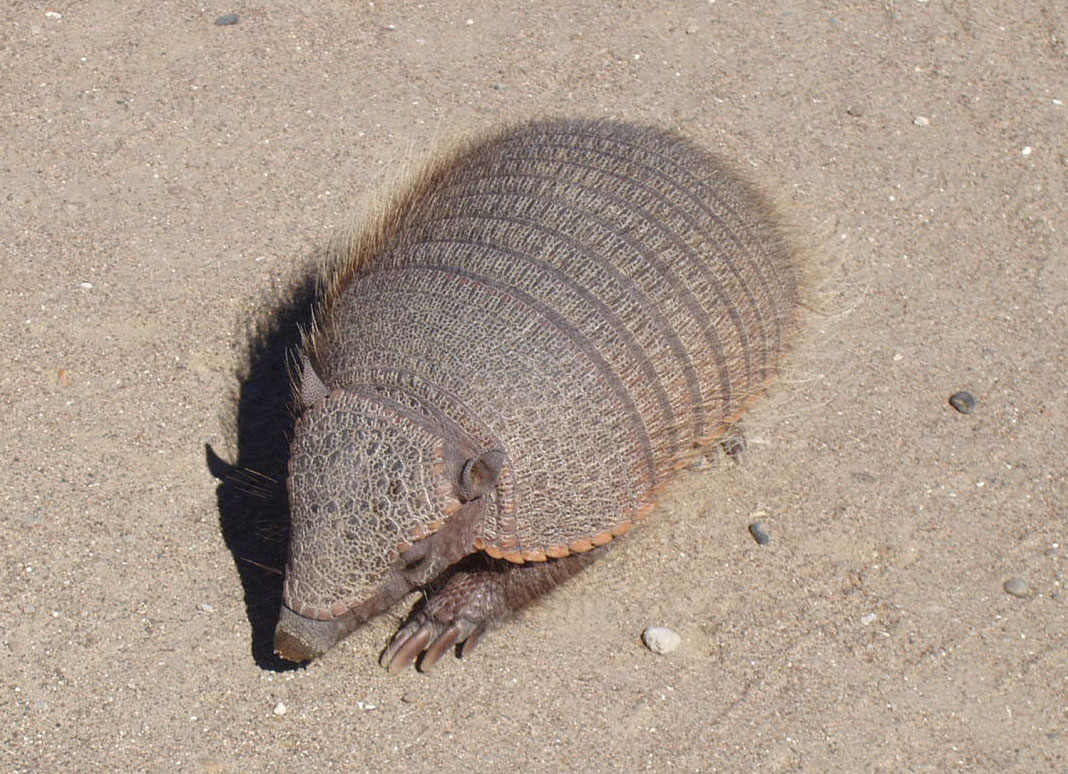 Animales en extinción (Uruguay)