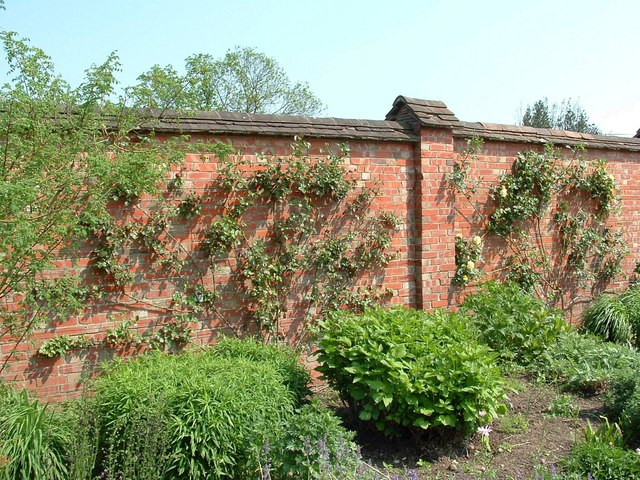 Churchill's Wall, Chartwell - geograph.org.uk - 809426