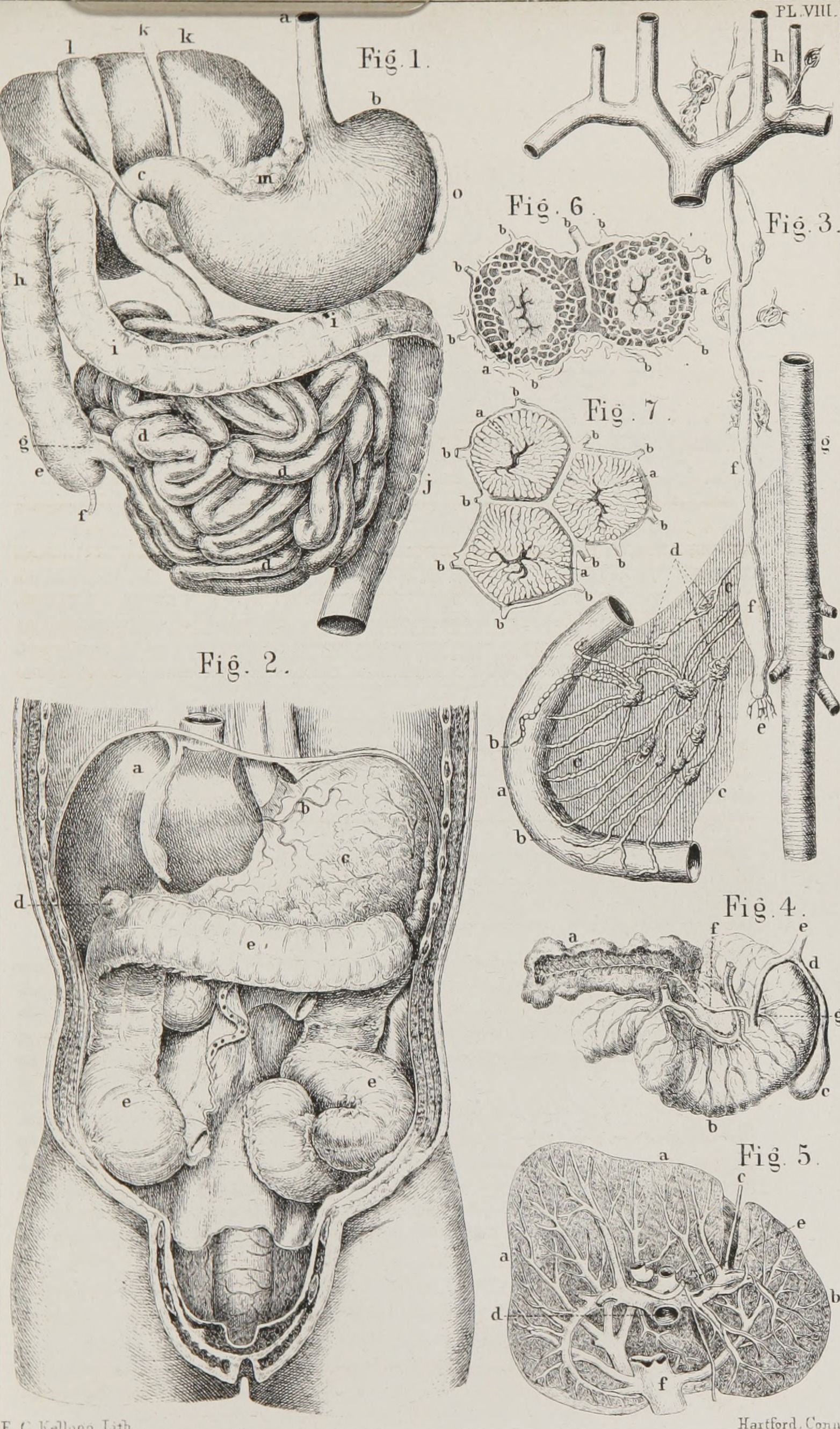 File:Class-book of physiology - for the use of schools and families ...