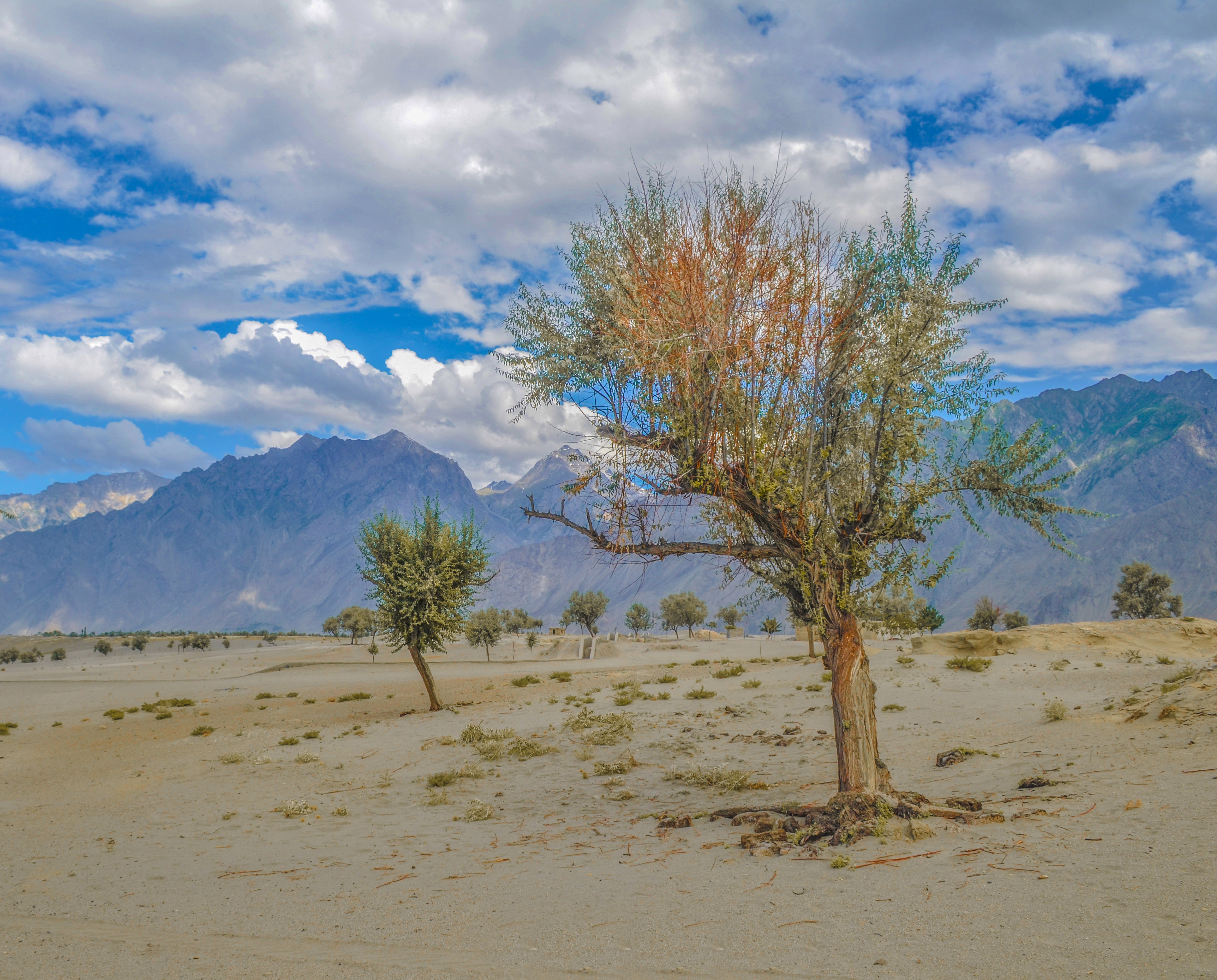 File Cold Desert Katpana Skardu Jpg Wikimedia Commons