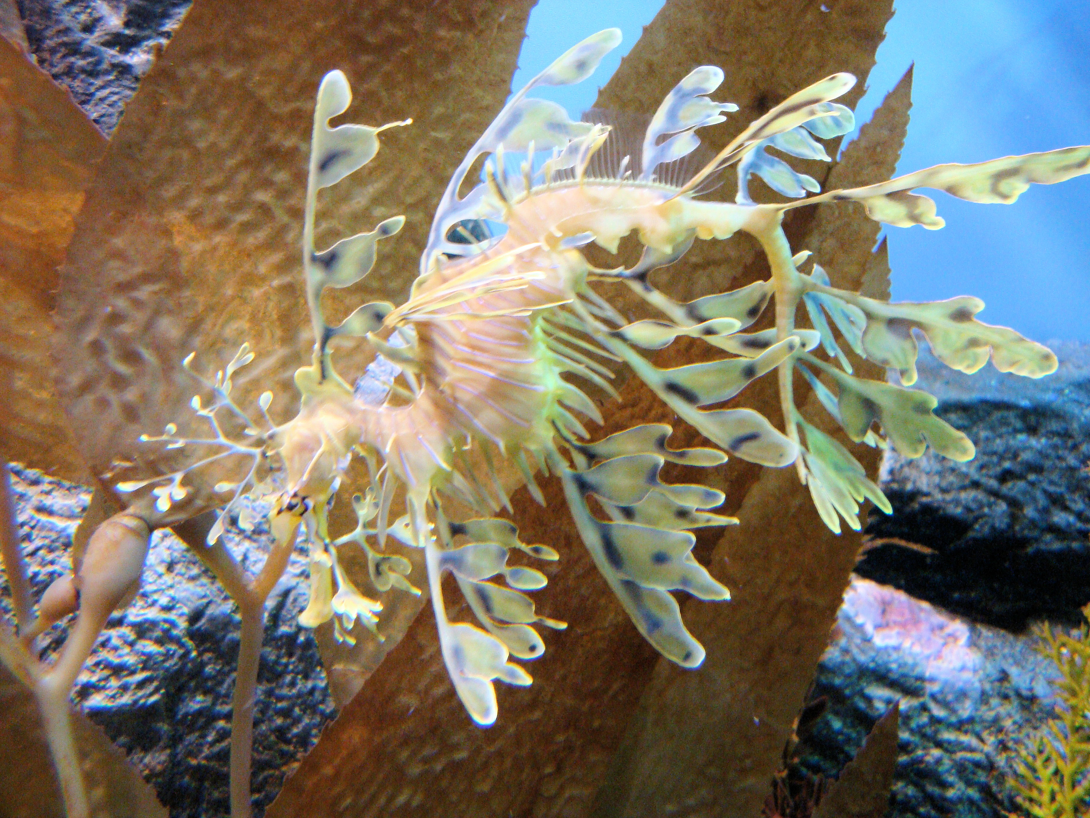 file dsc28214 leafy sea monterey bay aquarium monterey