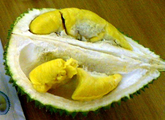 the feasibility of using durian pulp Since the fruit has a water-laden pulp,  stokes said techno-economic feasibility reports have been  nearly 40 hotels in nagpur region are using jackfruit as.