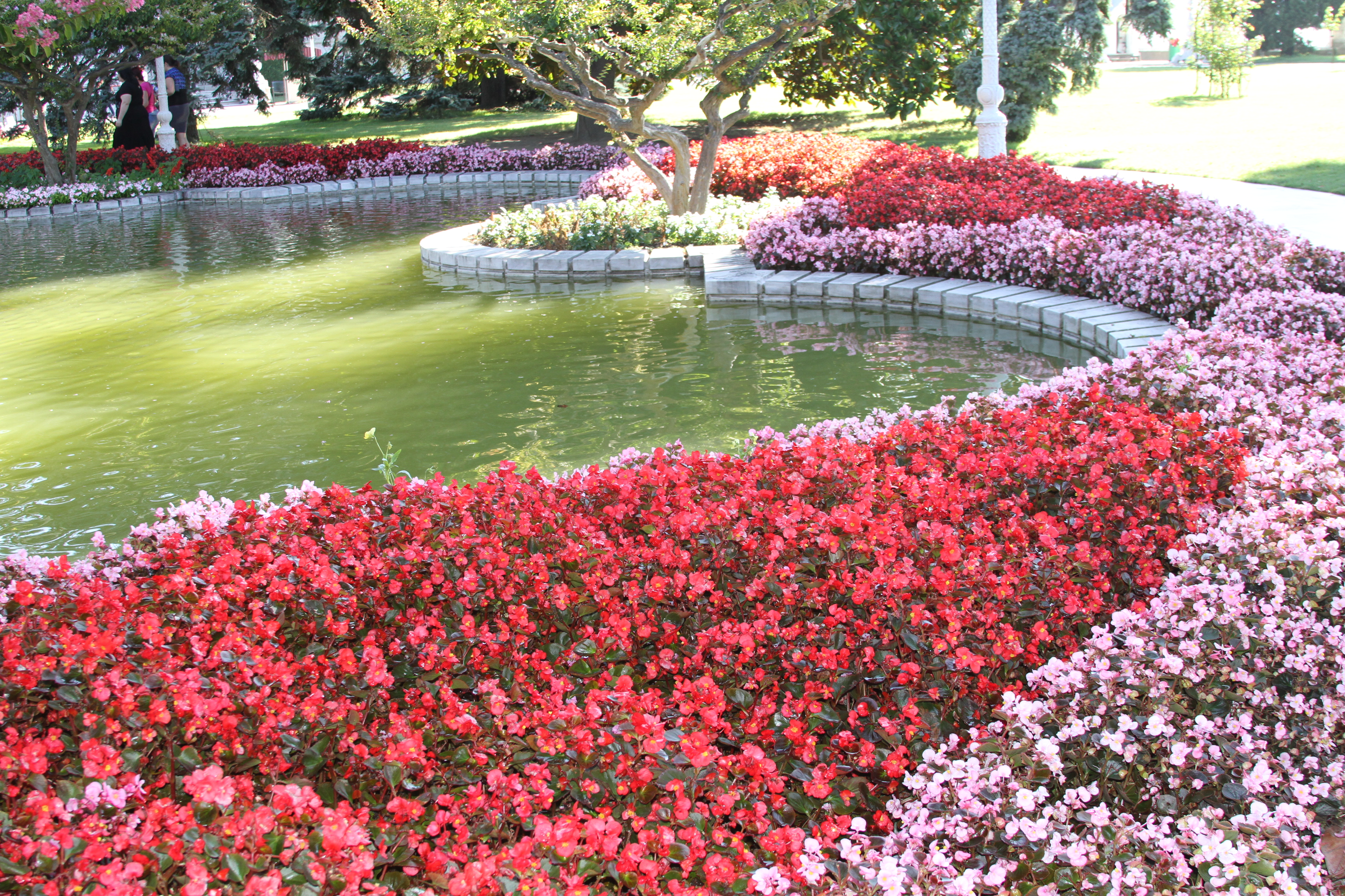 File:Flowers In The Garden Of Dolmabahçe Palace