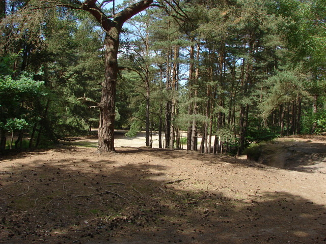 Horsell Common - geograph.org.uk - 1921266